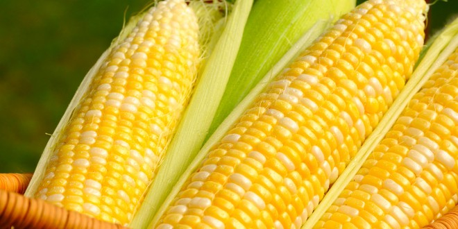 corn_wallpapers_03_-_aksdownload.com_-660x330